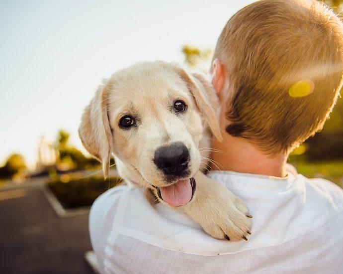 Piękna sierść psa to zasługa odpowiedniej karmy