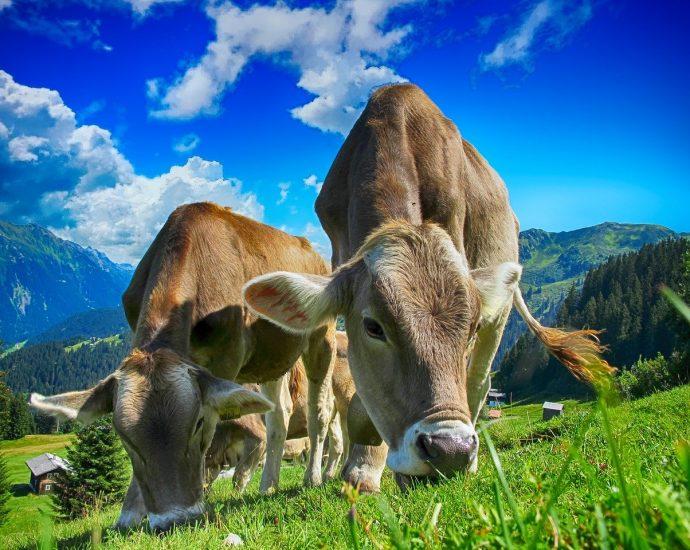 Budowa wiaty - atrakcyjna oferta dla rolnictwa