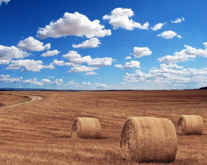 Hale dla rolnictwa - profesjonalna oferta