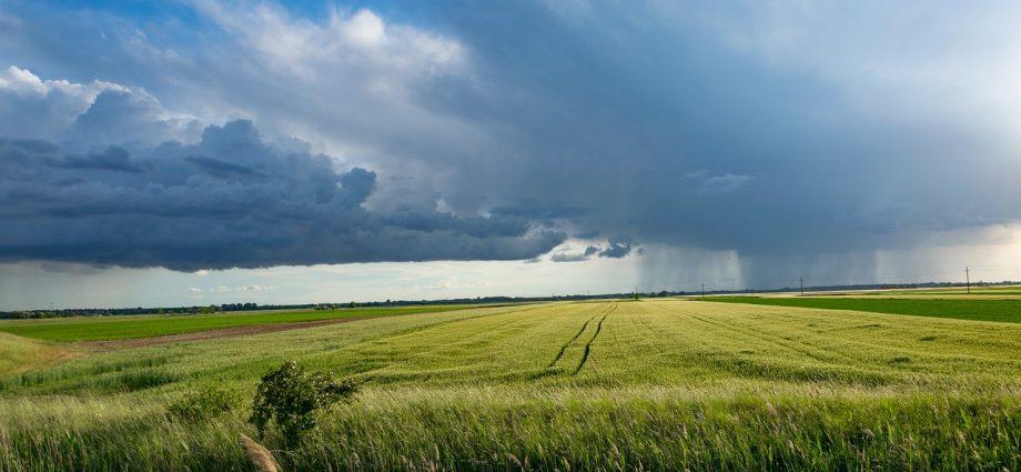 Budowa wiat dla rolnictwa